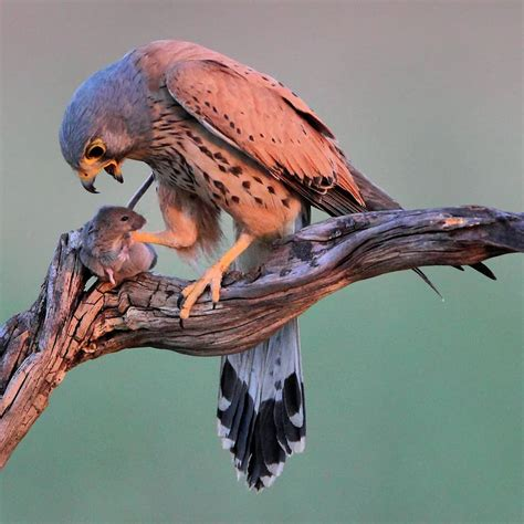 only_raptors: Beautiful Birds of Prey Photography by ...