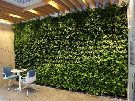 opción de muro verde   Muros verdes, Muros, Pared verde