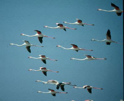 Opiniones de Migración de las aves