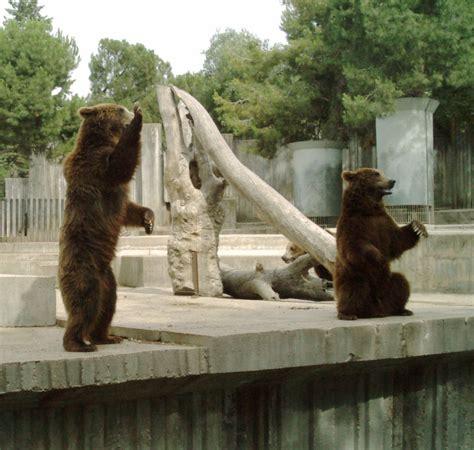 Opiniones de parque zoologico de madrid