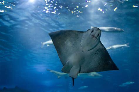 Opiniones del parque Aquarium de Barcelona Barcelona ...