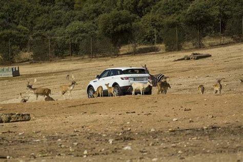 Opiniones del parque Safari Park Cadalso de los Vidrios ...