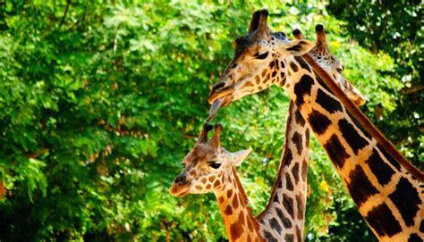 Opiniones del parque Zoo de Barcelona Barcelona | PACommunity