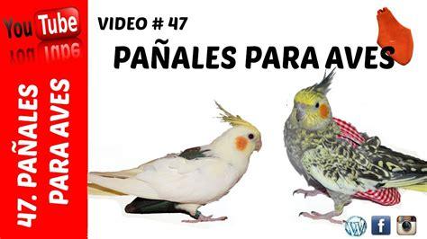 Opiniones Y Reviews De Pañales Para Aves Para Comprar ...