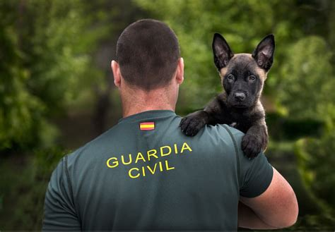 Oposiciones Guardia Civil 2019: convocatoria de 2.210 ...