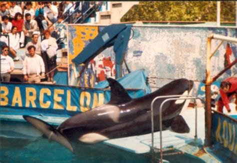 Orca Ulisses   Wikipedia, la enciclopedia libre