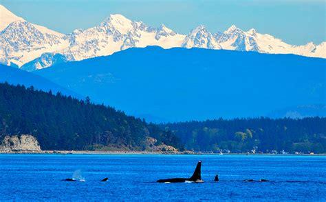 Orcas: curiosidades sobre este tipo de cetáceo