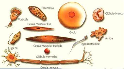 Organização celular dos seres vivos   Planeta Biologia