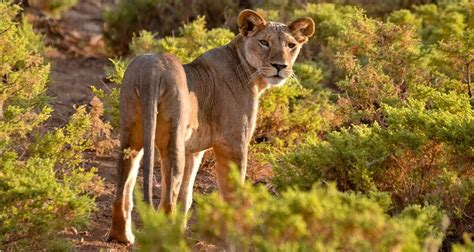 Organizar un safari en Kenia por libre paso a paso