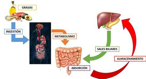 Orientación Nutricional: MACRONUTRIMENTOS 2
