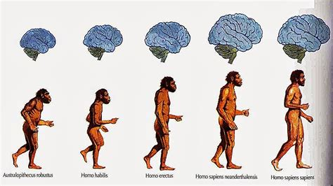 origen del hombre teorias evolución a   TEORÍAS ORIGEN DEL ...