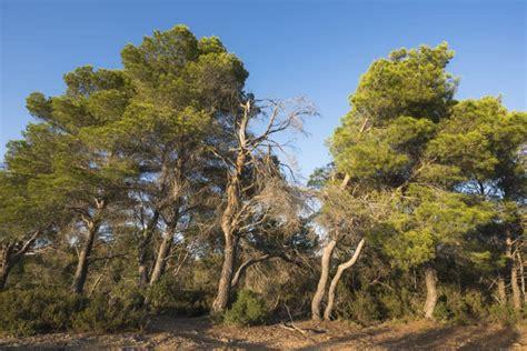 Origen y características del bosque mediterráneo