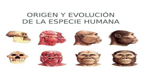 ORIGEN Y EVOLUCIÓN DE LA ESPECIE HUMANA. Evolución de las ...