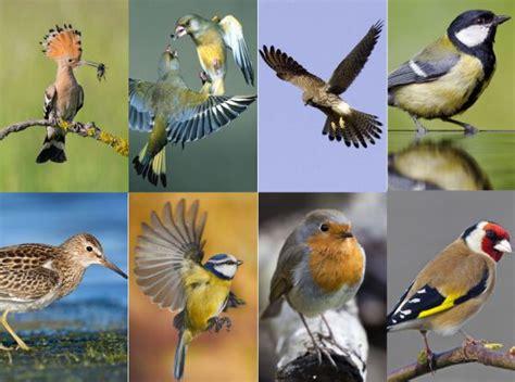 Ornitología: ¡Ya te veo, pajarito!   El Viajero   EL PAÍS