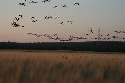 » Ornitólogos de todo el mundo visitan Doñana durante el otoño