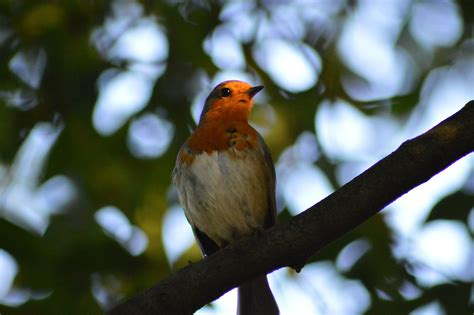 Ornitólogos utilizan drones para captar el canto de los ...