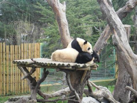 Orso bruno   Picture of Zoo Aquarium de Madrid, Madrid ...