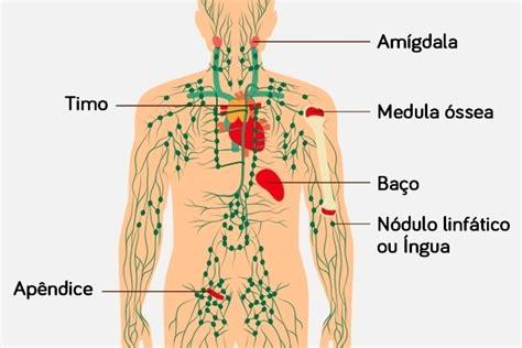 Os gânglios linfáticos   Análises Clínicas.com