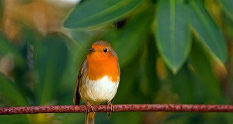 Otro lado del turismo en México: ¿por qué migran las aves ...