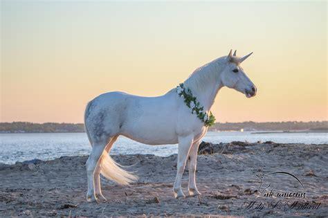 Our Unicorns – NH Unicorns