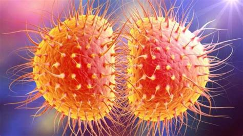 Outbreak Of  Super  Gonorrhea In Northern England | IFLScience