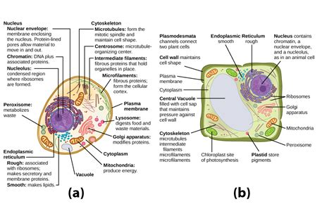 Outcome: Organelles | Biology  Early Release