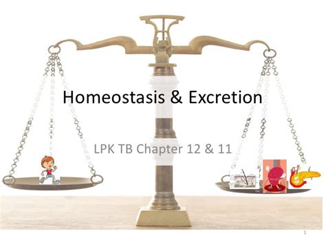 Overview of homeostasis & excretion