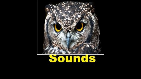 Owl Sound Effects All Sounds   YouTube