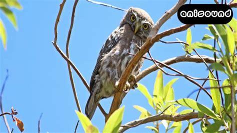OWL SOUND / LECHUZA SONIDO ANISOUND   YouTube