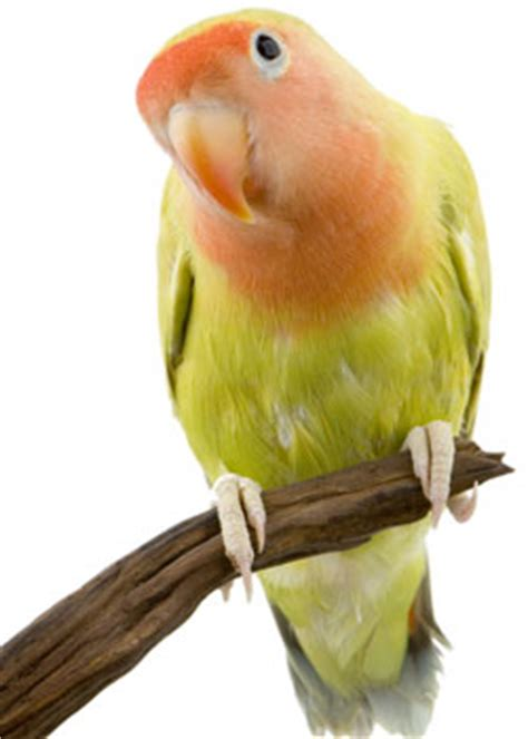 Owning a Bird | Birds | Other pets | Pets | Agriculture ...