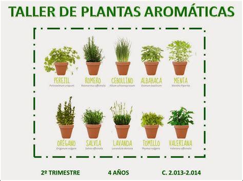 p4gregorimayans2013: TALLER 1  PLANTAS AROMÁTICAS: LA ...