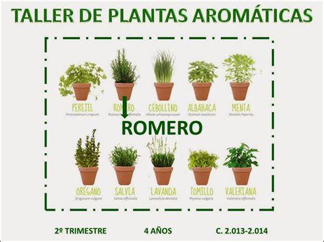 p4gregorimayans2013: TALLER DE PLANTAS AROMÁTICAS ROMERO