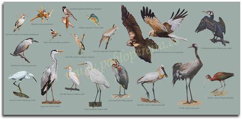 Pablo Pereira – Retratos de Fauna Cartel Aves de Humedal ...