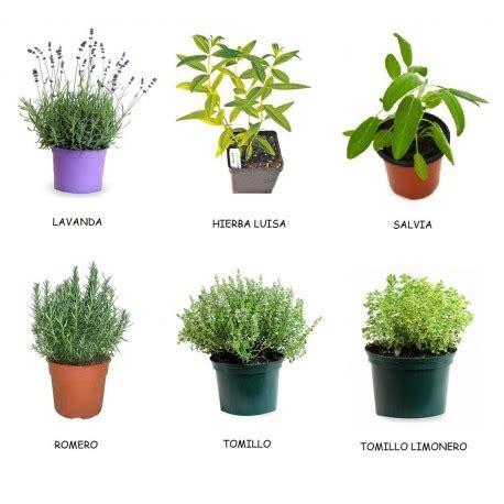 Pack de 6 plantas aromáticas