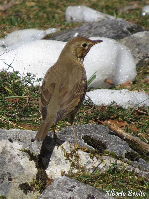 Pajareando por Cantabria: De pájaros y tritones por Liébana...