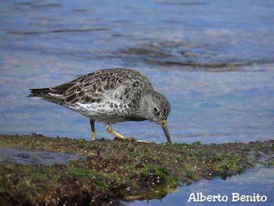 Pajareando por Cantabria: En la playa sol y pájaros...
