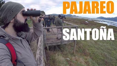 PAJAREO SANTOÑERO: Viendo aves en las marismas de Santoña ...