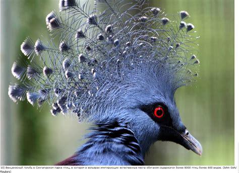 Pájaro azul   Pájaros azules, Aves hermosas y Pajaros exoticos