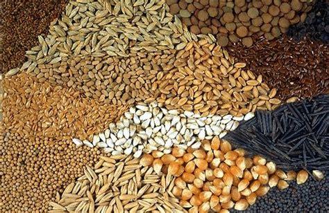 PÁJARO CARDENAL 】Características, Alimentación, Hábitat y más