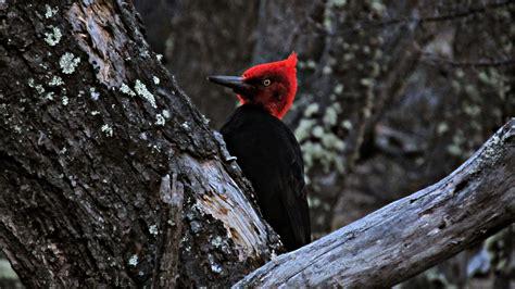 Pájaro carpintero. | Pájaro carpintero