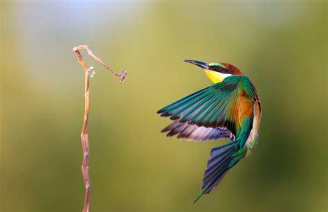 Pájaro de colores hd 2008x1299   imagenes   wallpapers ...