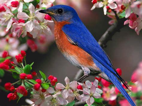 Pájaro de colores :: Imágenes y fotos