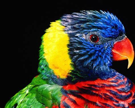 Pájaro exótico   1280x1024 :: Fondos de pantalla y ...