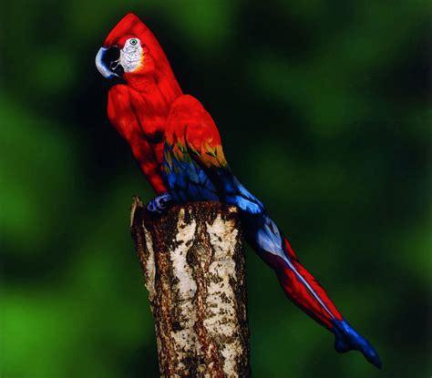 ¿Pájaro o mujer? Mire bien la fotografía