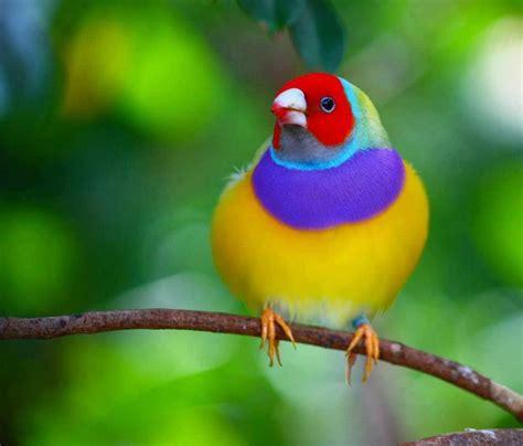 PAJARO PRECIOSO   Aves, Aves de colores y Pájaros hermosos