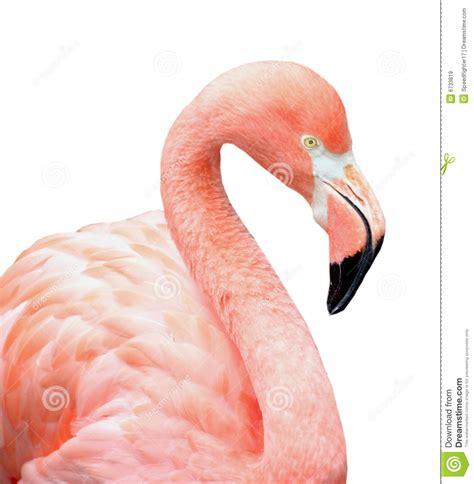 Pájaro rosado del flamenco imagen de archivo. Imagen de ...