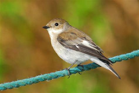 Pájaro silvestre :: Imágenes y fotos
