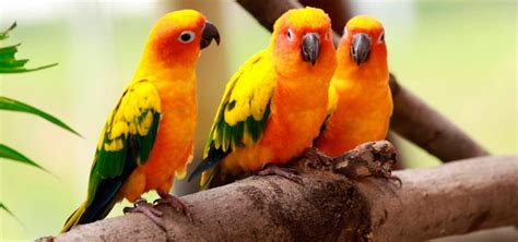 PÁJAROS  Aves    Tipos y nombres de pájaros explicados uno ...