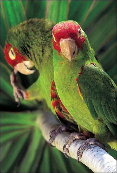Pájaros bebés balbucean como los humanos antes de cantar ...