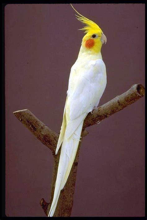 Pájaros | Biomascotas Peñafiel | Página 2